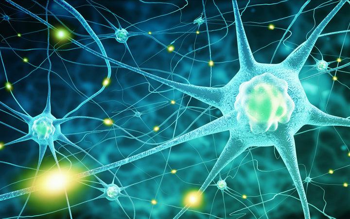 Neuroni - Identificato nuovo percorso neurobiologico nel disturbo bipolare